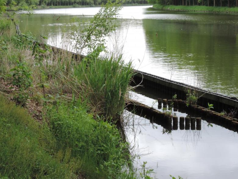 Paaiplaats voor vissen